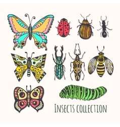 Colorful insects collection Hand drawn set for vector image