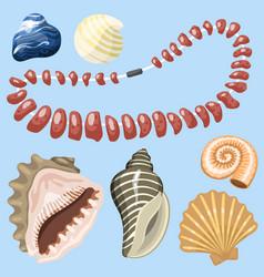 sea marine animals and shells souvenirs cartoon vector image vector image