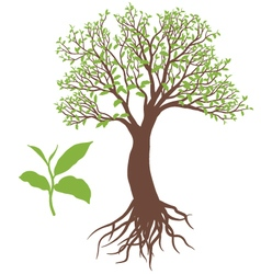 The tree with root vector image vector image
