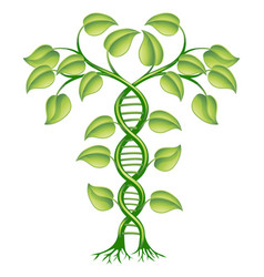 dna plant concept vector image vector image