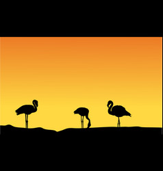 silhouette flamingo at sunset scenery vector image
