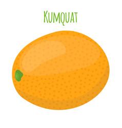 Kumquat exotic fruit cartoon flat style vector