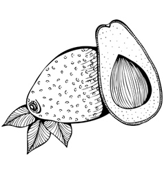 Monochrome drawing of avocado vector