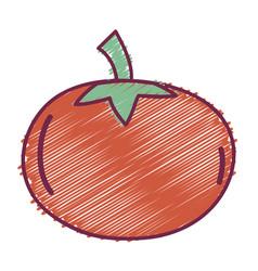 Delicious fresh tomato organic vegetable vector