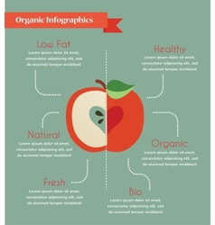 organic infogtaphics vector image