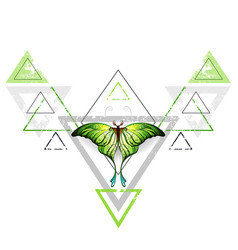 Geometric pattern with green butterfly vector