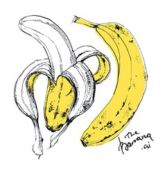 Ink drawn of banana fruit vector
