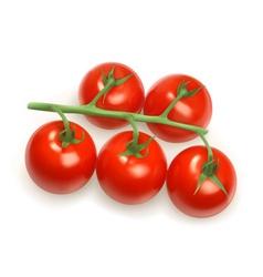 Cherry tomatoes vector