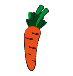 delicious vegetable carrot vector image