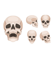 human skull at different sides monochrome vector image