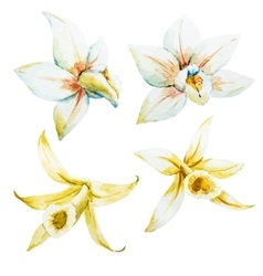 Watercolor white and yellow orchids vector image