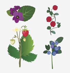 wild berries and flowers vector image