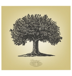 Tree in engraving style vector