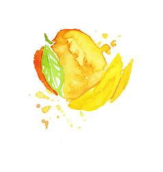 Juicy ripe mango fruit watercolor hand painting vector
