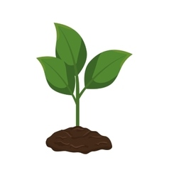 Plant with pot isolated icon vector