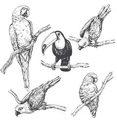 doodle tropic birds vector image vector image