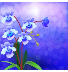 Bush Orchid violet on a luminous vector image