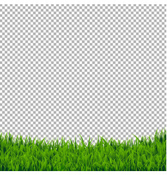 Green grass border isolated vector