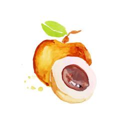 Peach juicy ripe fruit watercolor hand painting vector