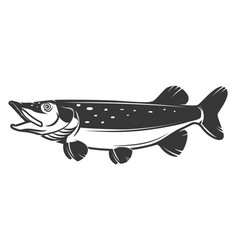 pike fish icon isolated on white background vector image vector image