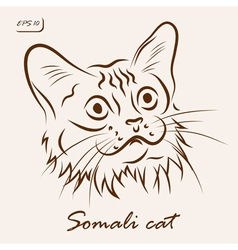 Somali cat vector