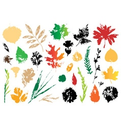 Imprint of autumn leaves vector