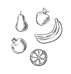 Apple pear lemon banana and pomegranate vector