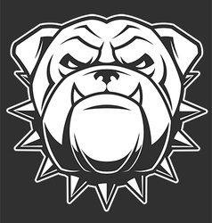 The head of a fierce bulldog vector