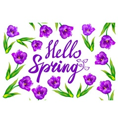 Hello spring text with violet tulip flowers and vector