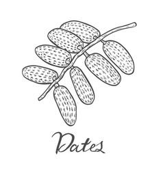 dates hand drawn vector image