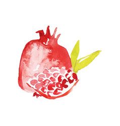 juicy ripe pomegranate fruit watercolor hand vector image