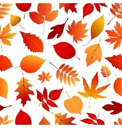 Autumn red and orange leaves pattern vector