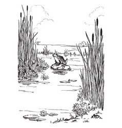 Frog border is a decorated with a frog in a swamp vector