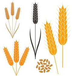 Wheat vector image