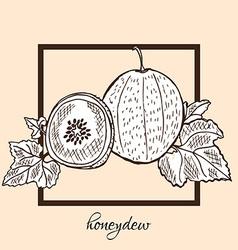 hand drawn honeydew vector image vector image