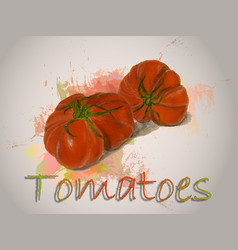 Red tomato watercolor food vector