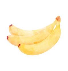 watercolor banana fruit on white vector image vector image