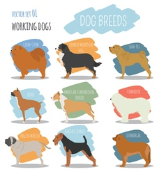 Dog breeds working watching dog set icon flat vector