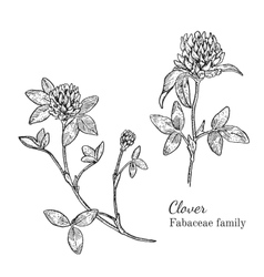 Ink clover hand drawn sketch vector