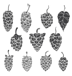 Set of hops plant vector