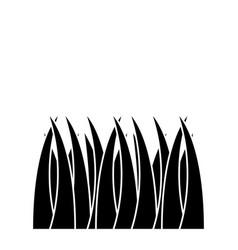 grass natural botanical foliage icon vector image