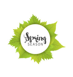 Spring season letter and green leaves white vector