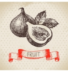 Hand drawn sketch fruit fig eco food background vector