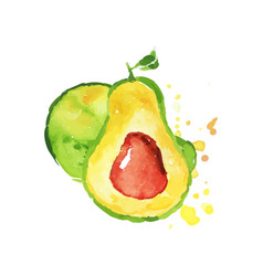 Juicy ripe avocado fruit watercolor hand painting vector