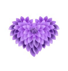 Violet dahlia flowers in a heart shape vector