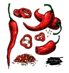 Chili Pepper hand drawn vector image vector image
