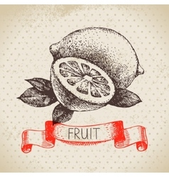Hand drawn sketch fruit lemon eco food background vector