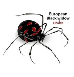 European black widow vector