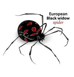 European black widow vector
