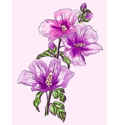 Purple hibiscus flower sketch vector